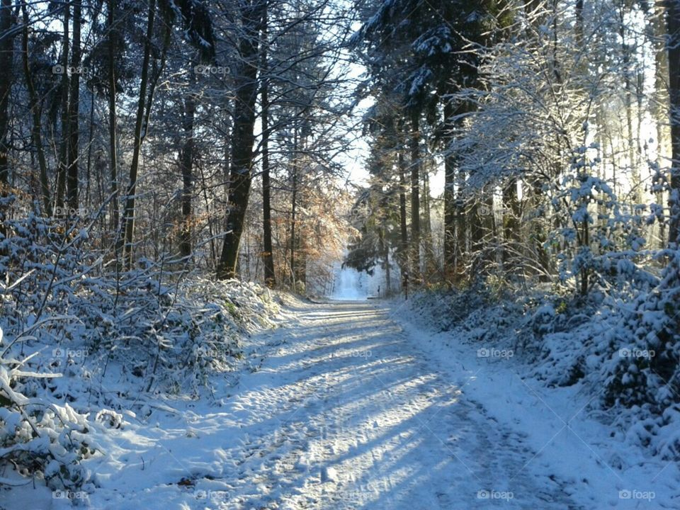 Sunny Winter day in the Forest
