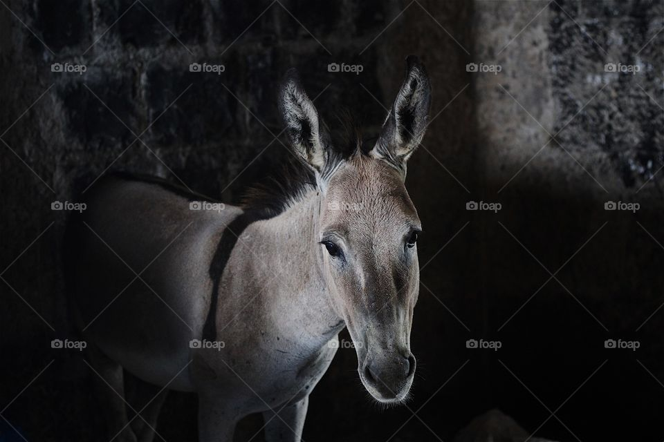 When you go to donkeys house don't talk about ears