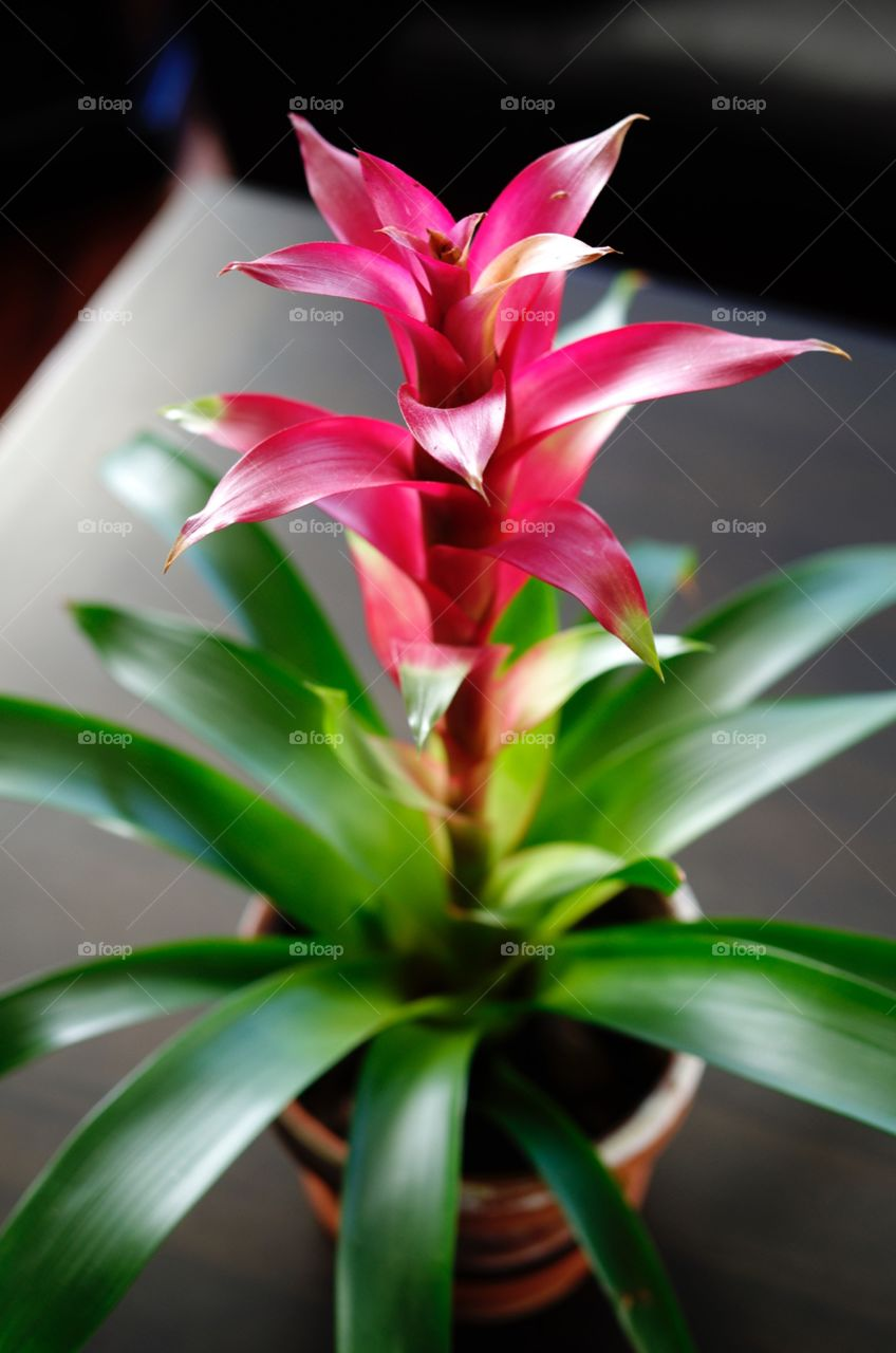 High angle view of plant