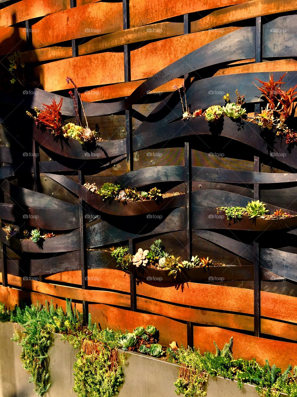 Artistic wall of succulents