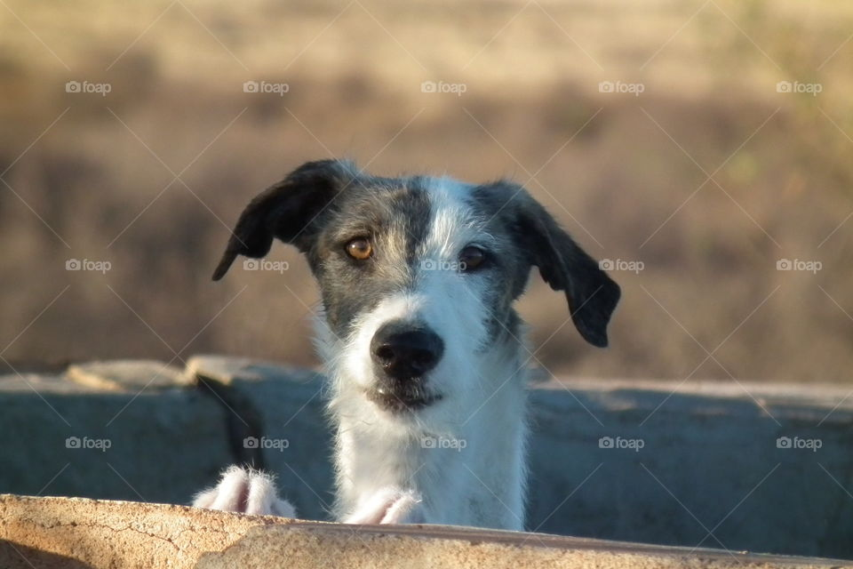 when you doggie can't wait for you to come home, looking over the wall in great expectation!