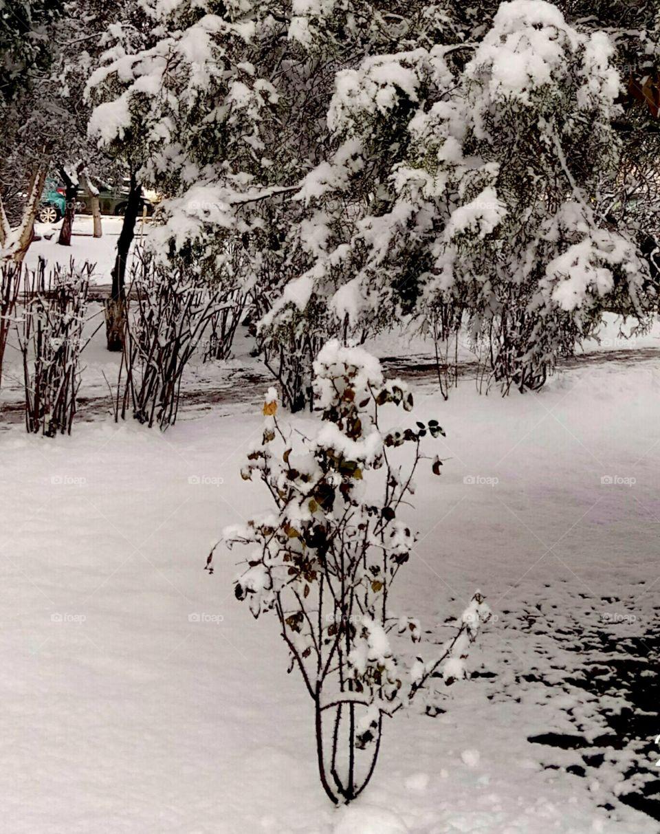 Tree, Snow, Winter, Wood, Landscape