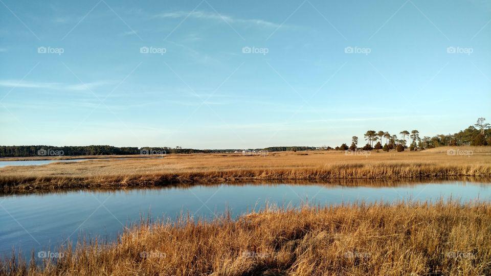 Marsh at the bay