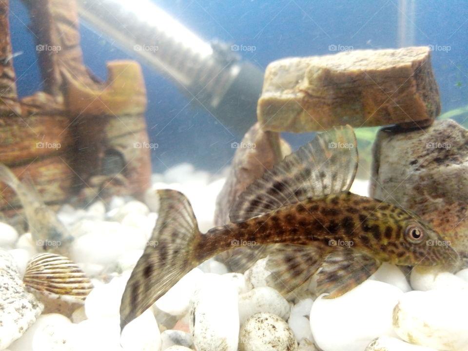 Underwater, Fish, Aquarium, Nature, Water