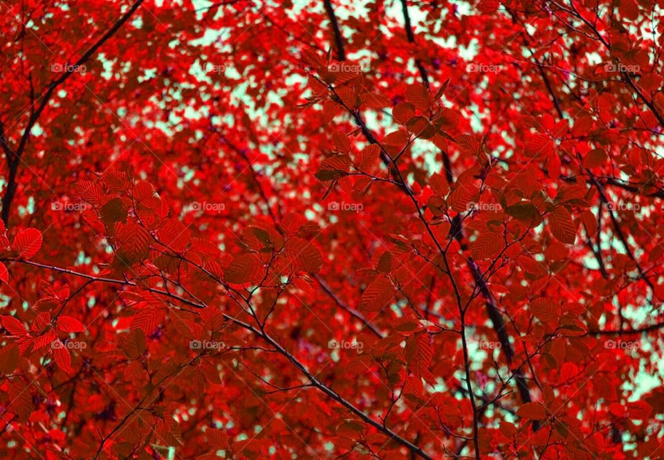 Leaves, Turin (Italy)