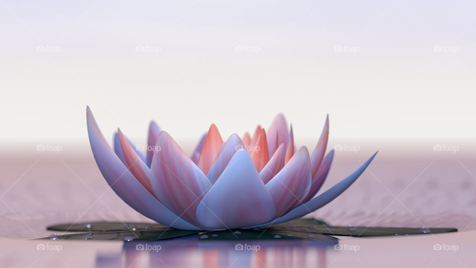 Lotus water lilly
