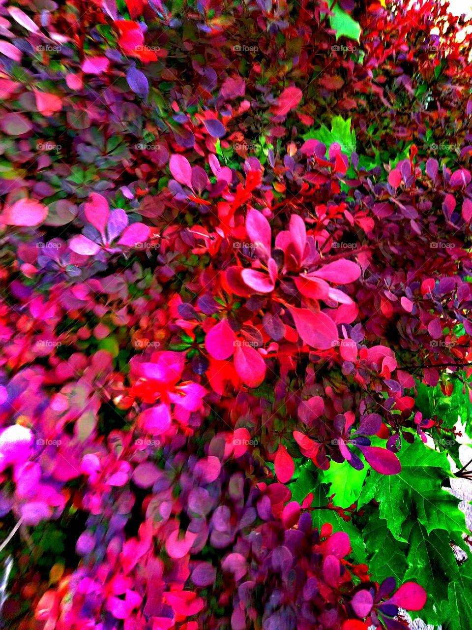 Nature, Color, Leaf, Garden, Flower