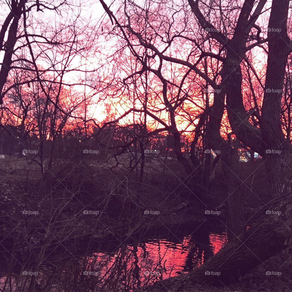 Sunset pond
