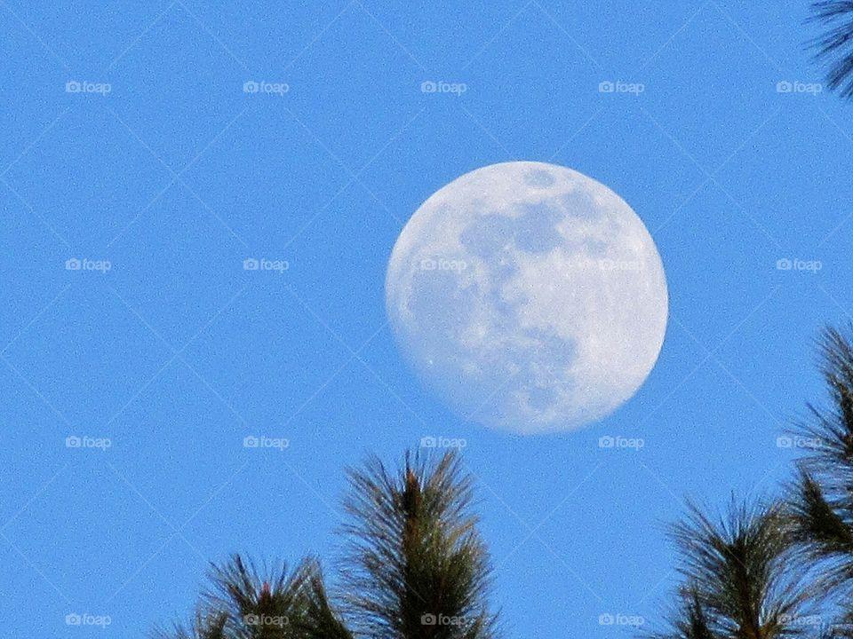 waxing gibbus moon