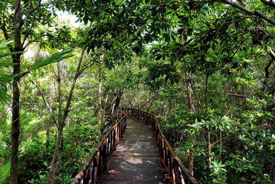 A Walk Through the Jungle