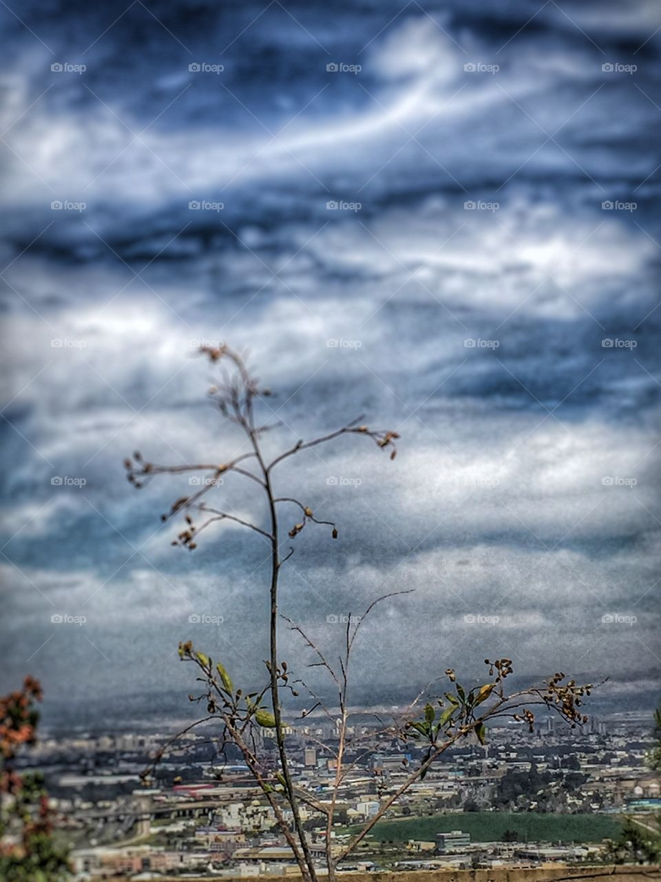 Tree branch on sky background and beautiful landscape