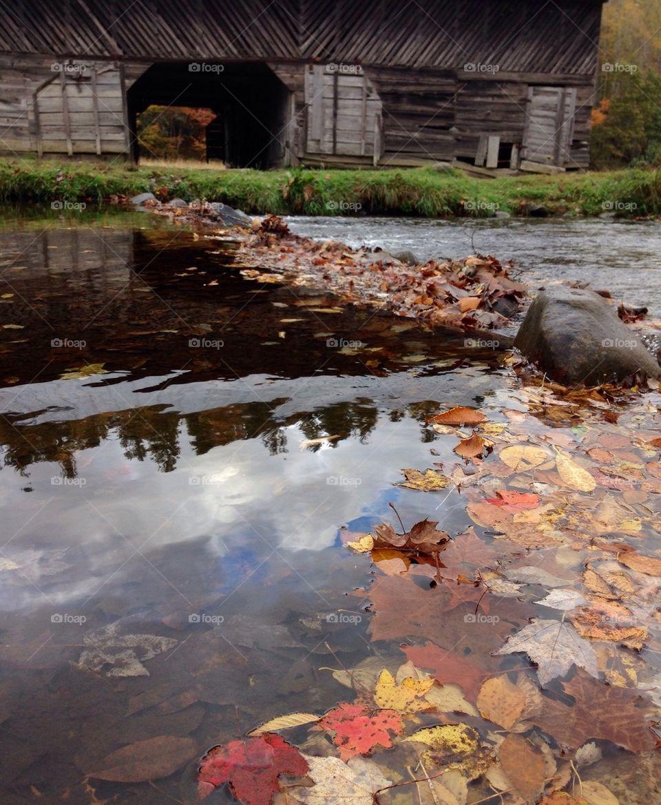 Fall Leaves on the Farm