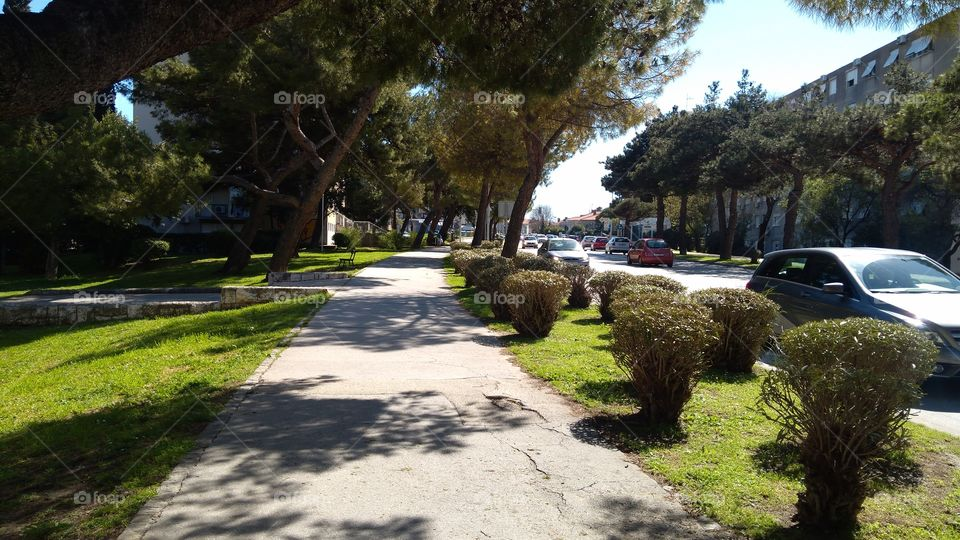 Between the Park and the Street