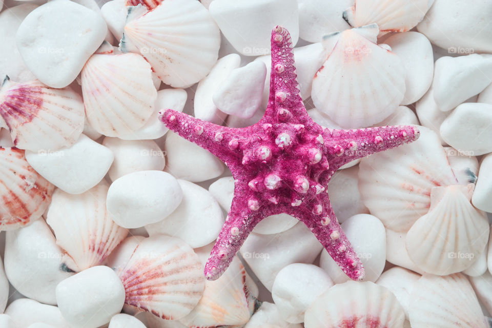 seashells and starfish on a background of white stones