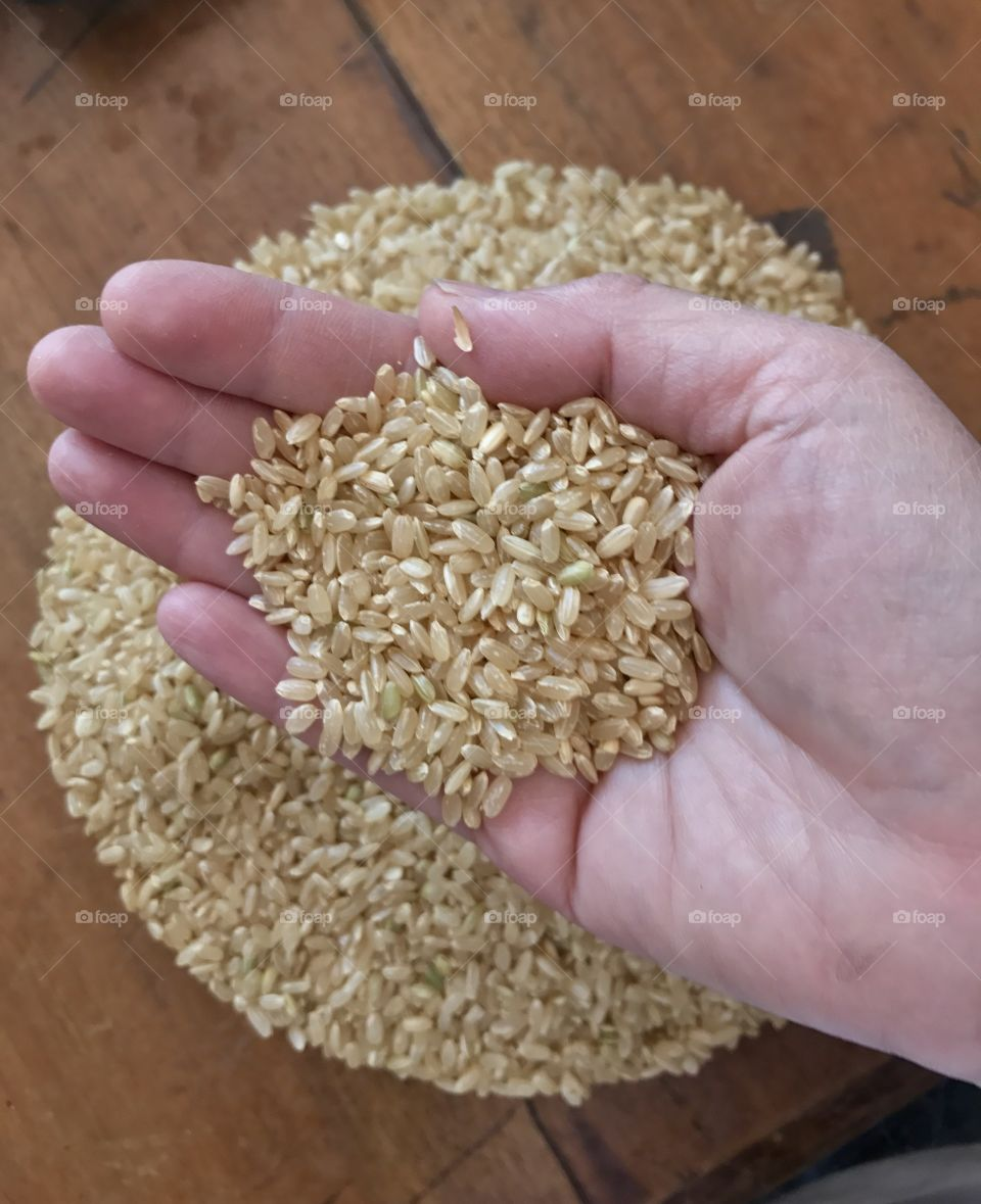 Hand holding grains of rice