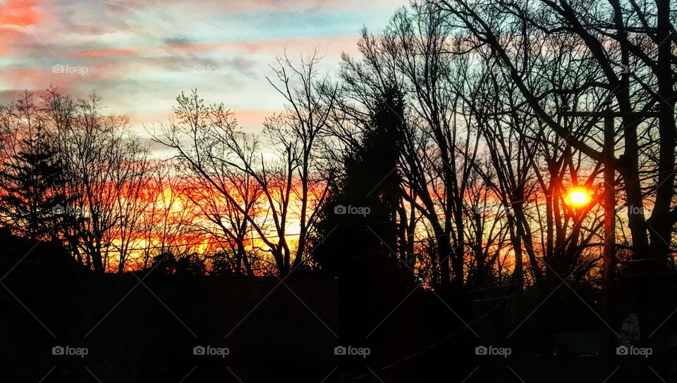 Sunset with tree silhouettes in Ohio