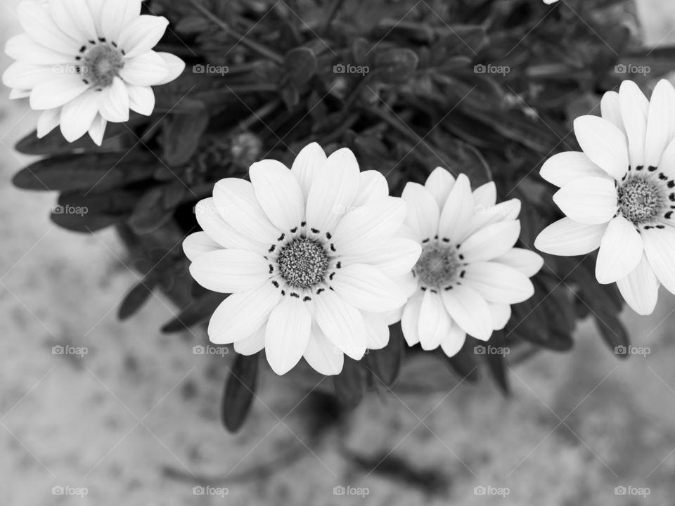 Beautiful monochrome effect of flowers