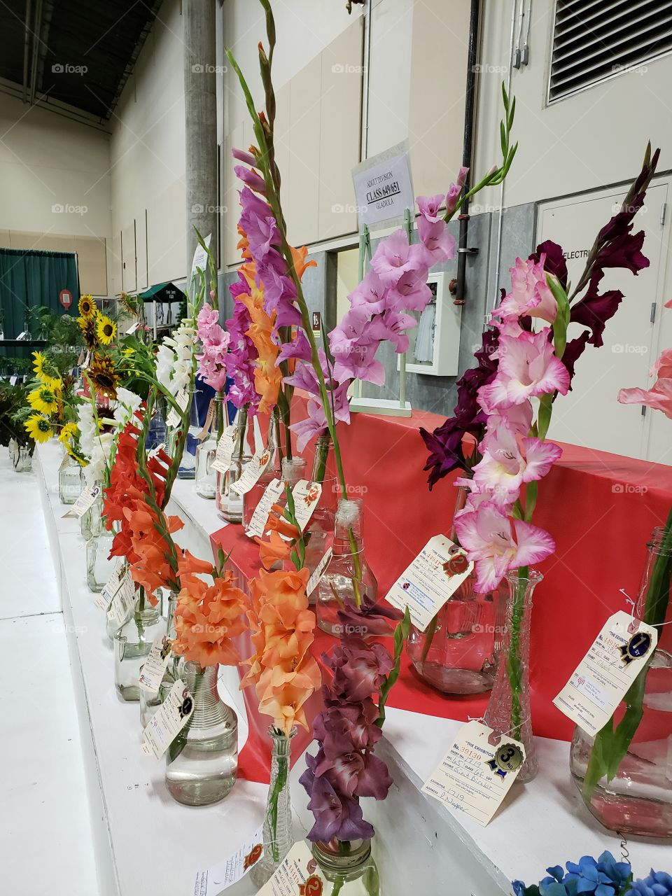 Judged flowers at the fair 3