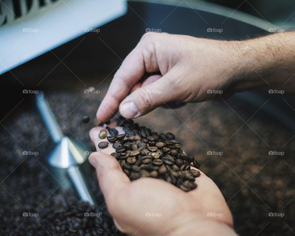 Man picking coffee beans.