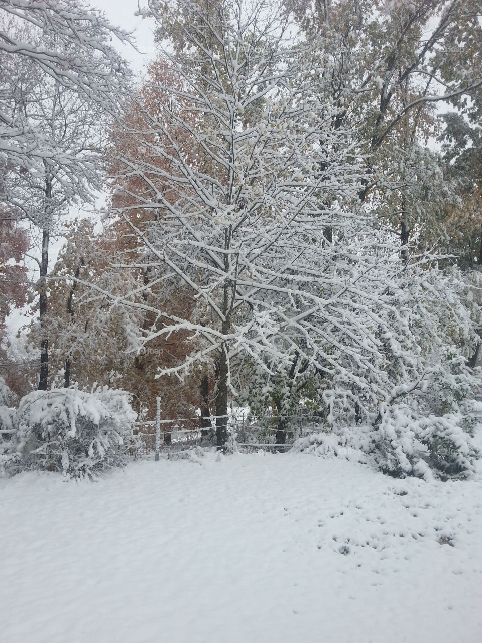 A Tennessee Backyard In Winter