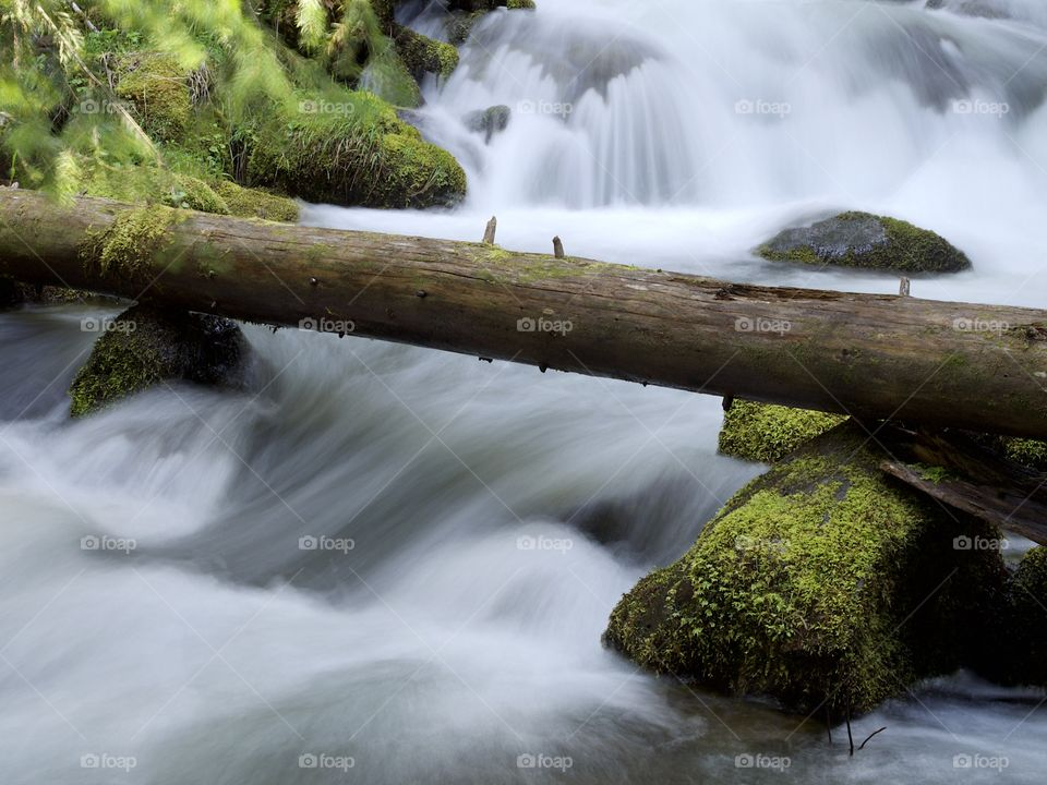 Moss covered rocks and logs in a waterfall in the woods of Southern Oregon on a nice spring day.