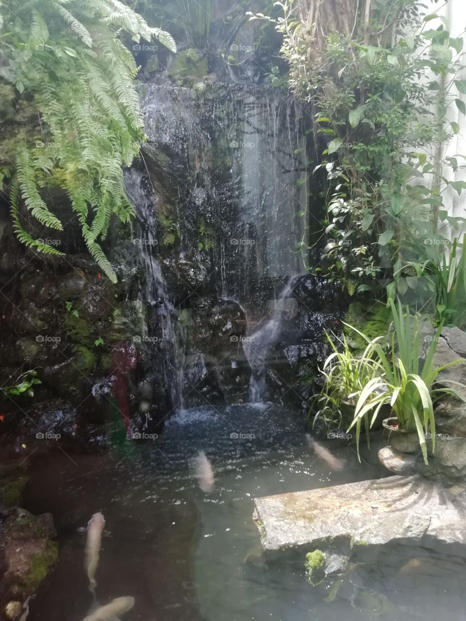 Another fish pond at the hotel