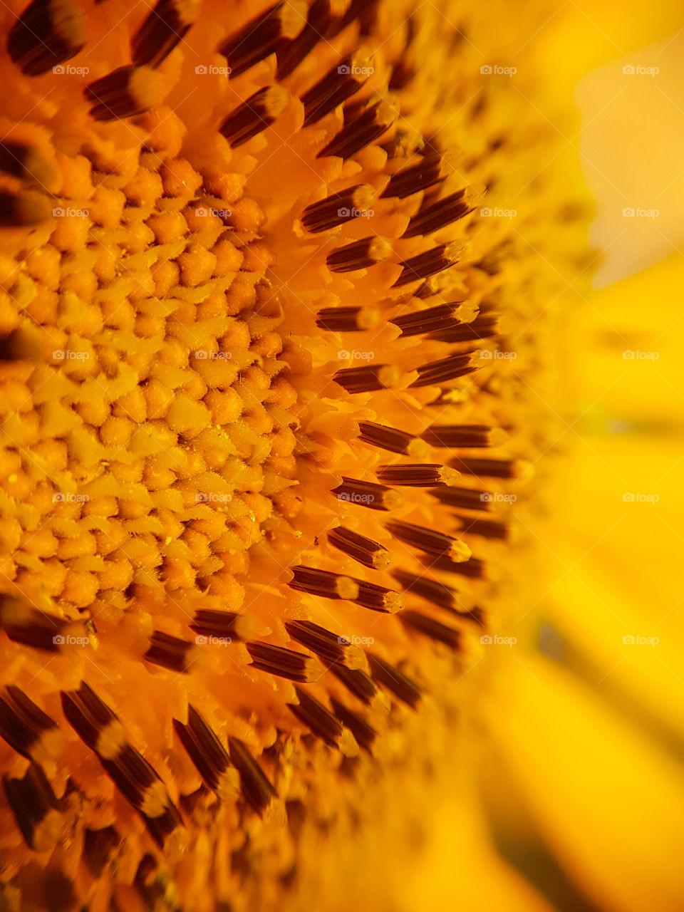 yellow flower seeds