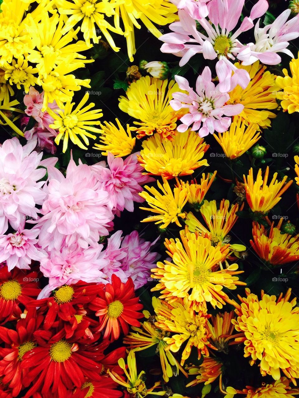 High angle view of multi coloured flowers
