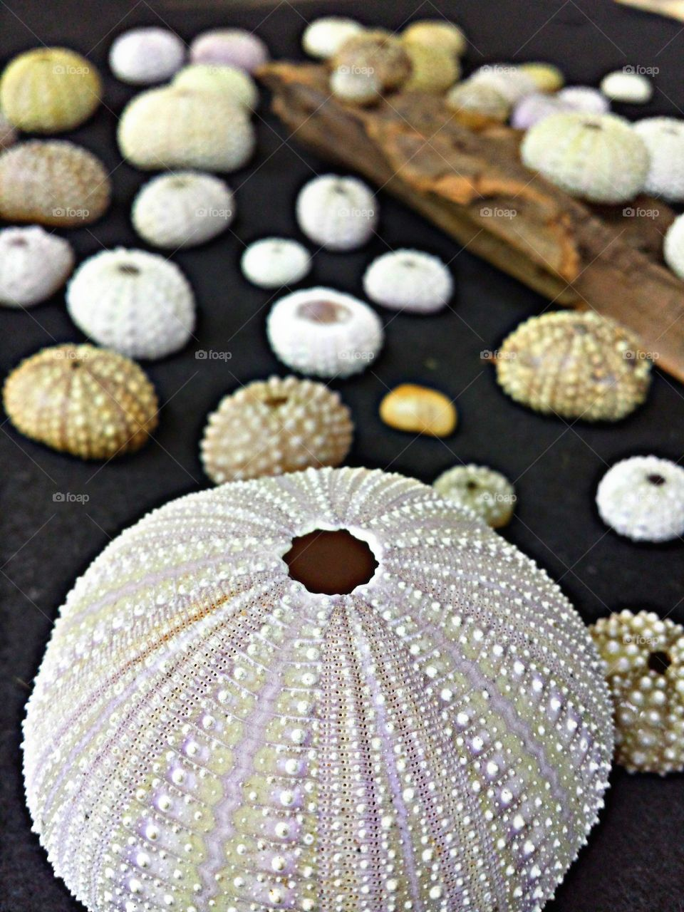 Close-up of sea urchin