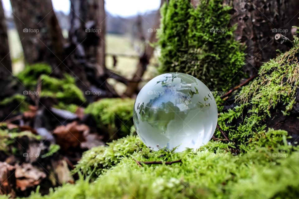 Close-up of paper weight on moss