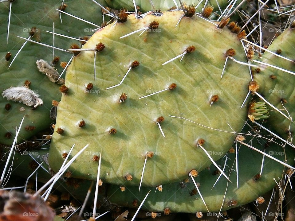 a prickly life