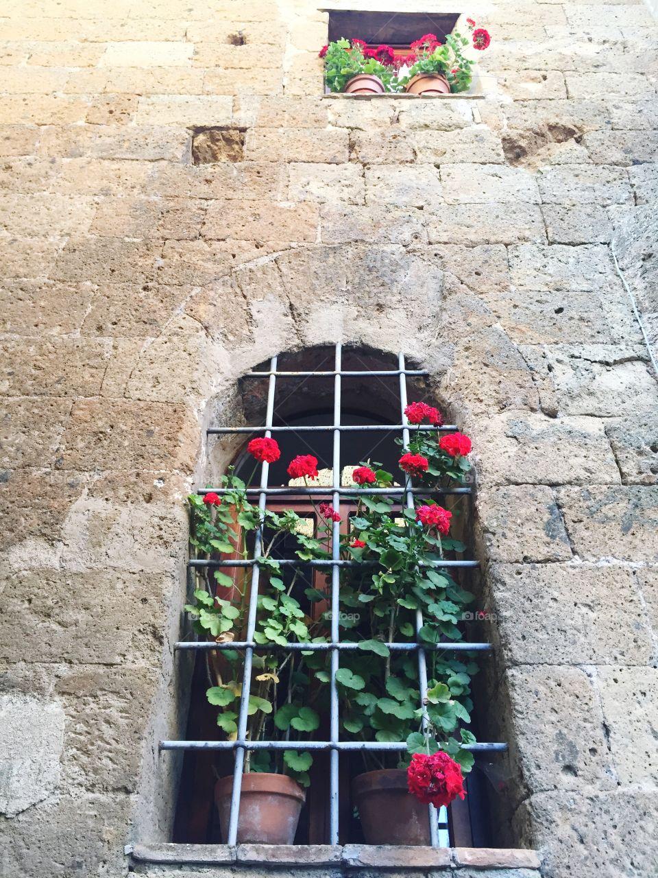 Geraniums on stone wall