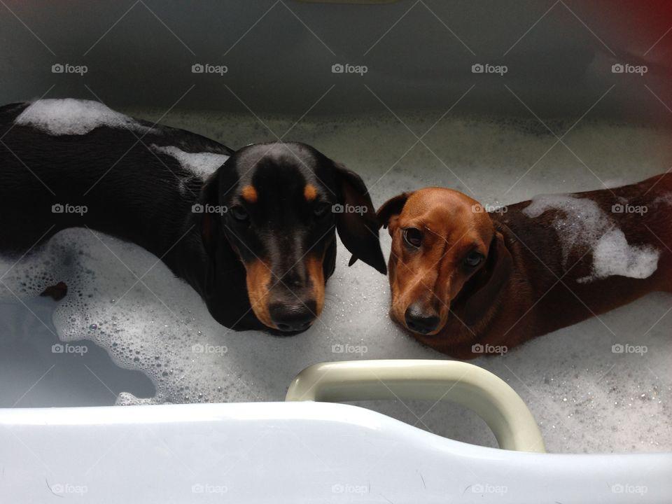 Two cute dogs in a bathtub