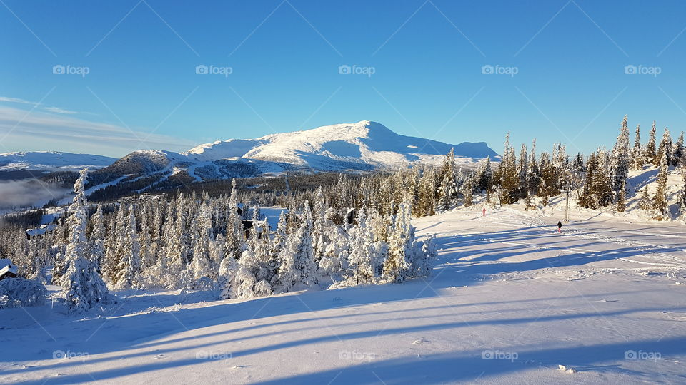 Scenic view of winter