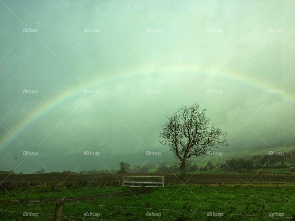 Rainbow In The Gloom