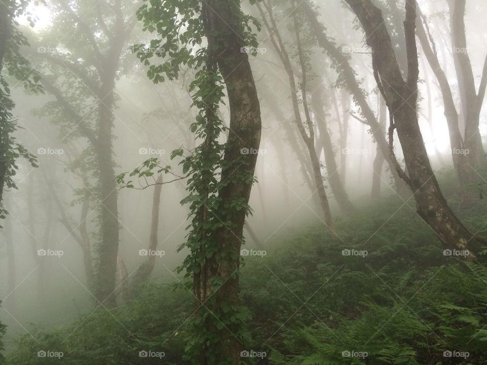 Dröm skog