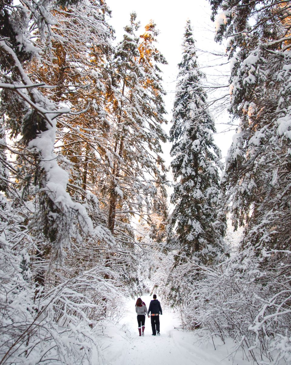 A couple walking through a massive forest of large pines and soft snow