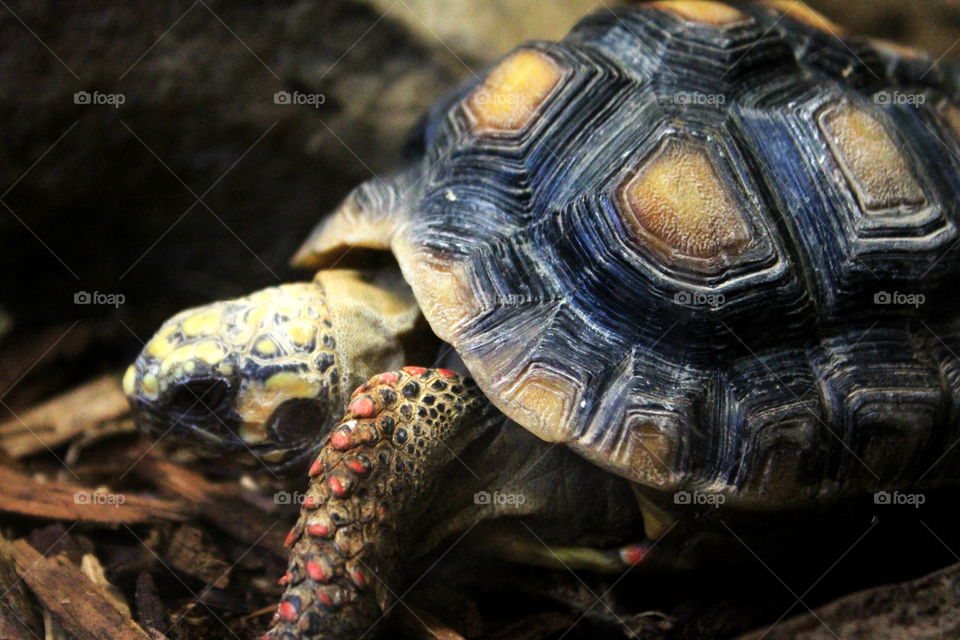 This is a turtle taking it easy in an aquarium at the Newport Aquarium in Kentucky.