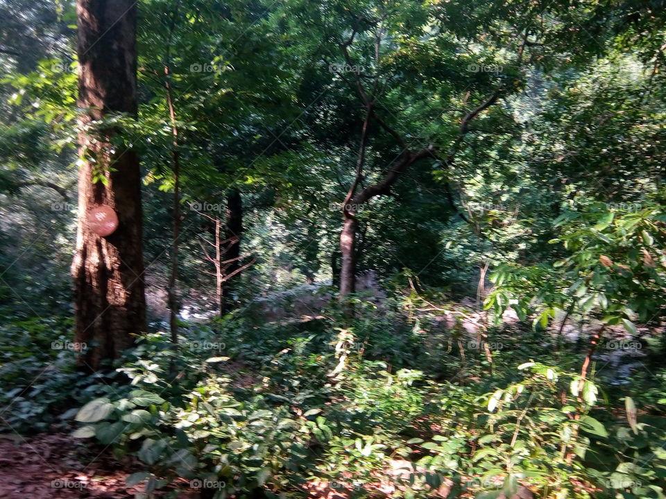 Nature 2017-11-04  003  #আমার_চোখে #আমার_গ্রাম #nature