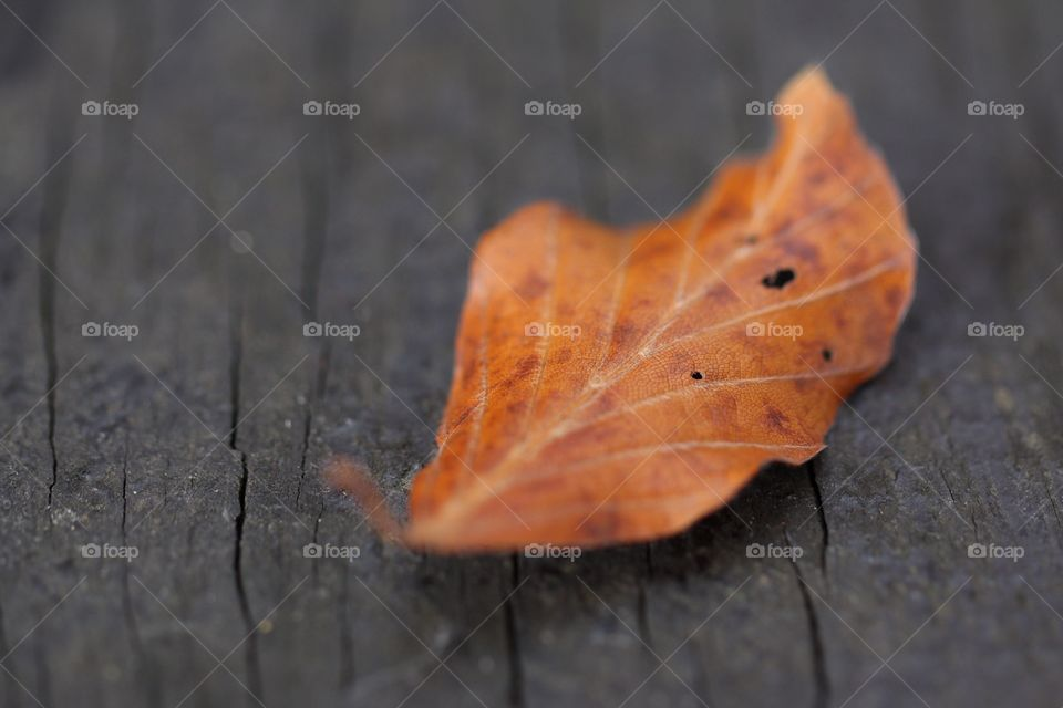 Brown leaf on the wooden background