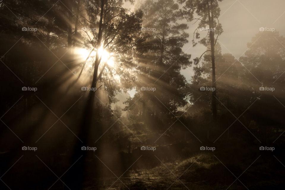 nature forest fog sonrise by resnikoffdavid