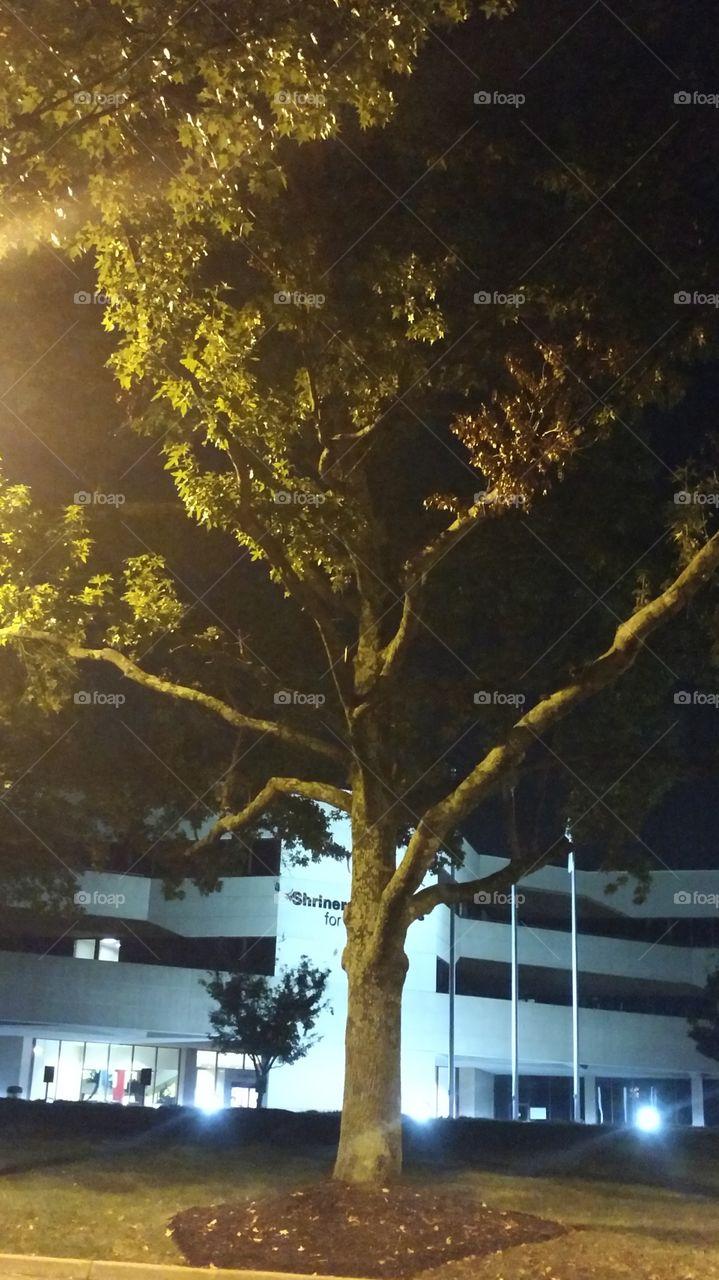 No Person, Tree, Outdoors, Landscape, Light