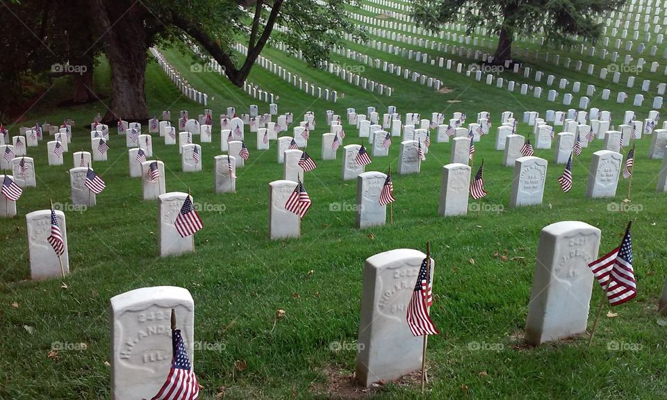 veterans day at a national cemetery