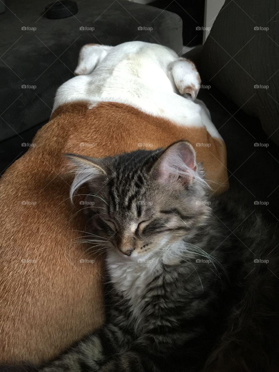Family love. Kitten snuggles puppy