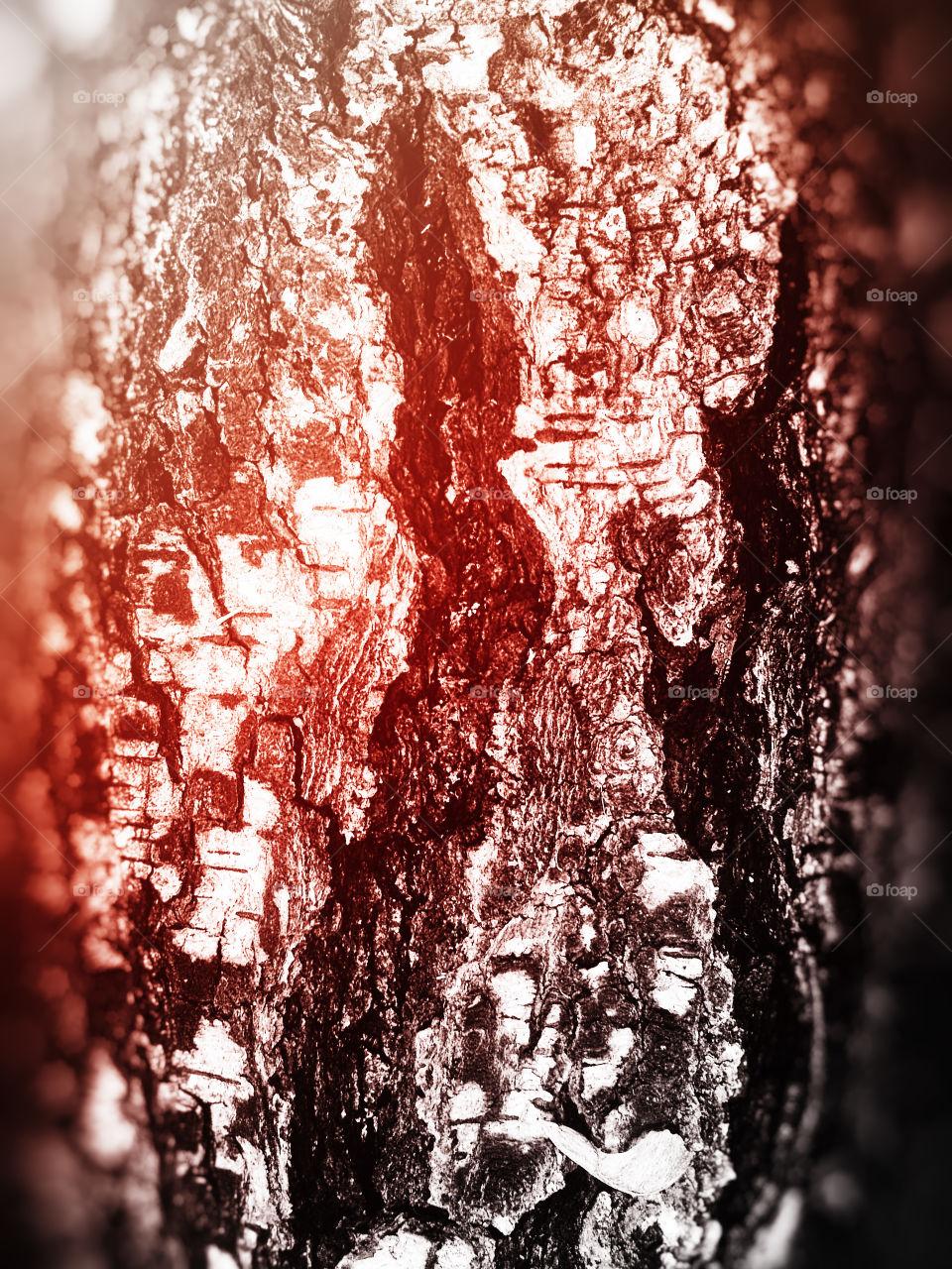 Vivid tree texture bokeh backdrop