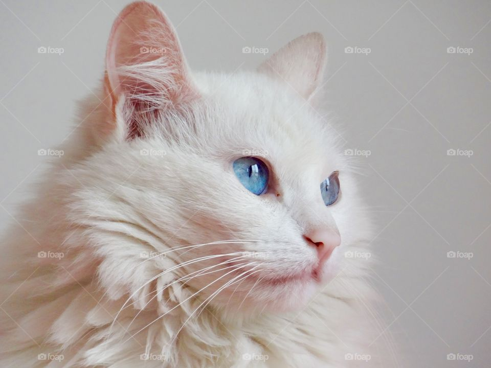 Close-up of cat on white background
