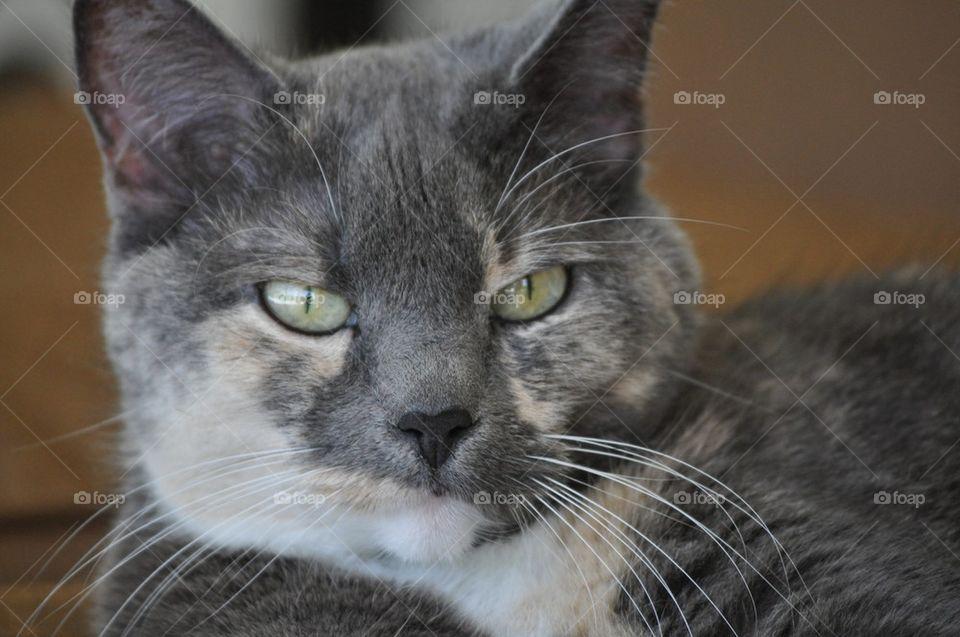 Kaylee kat