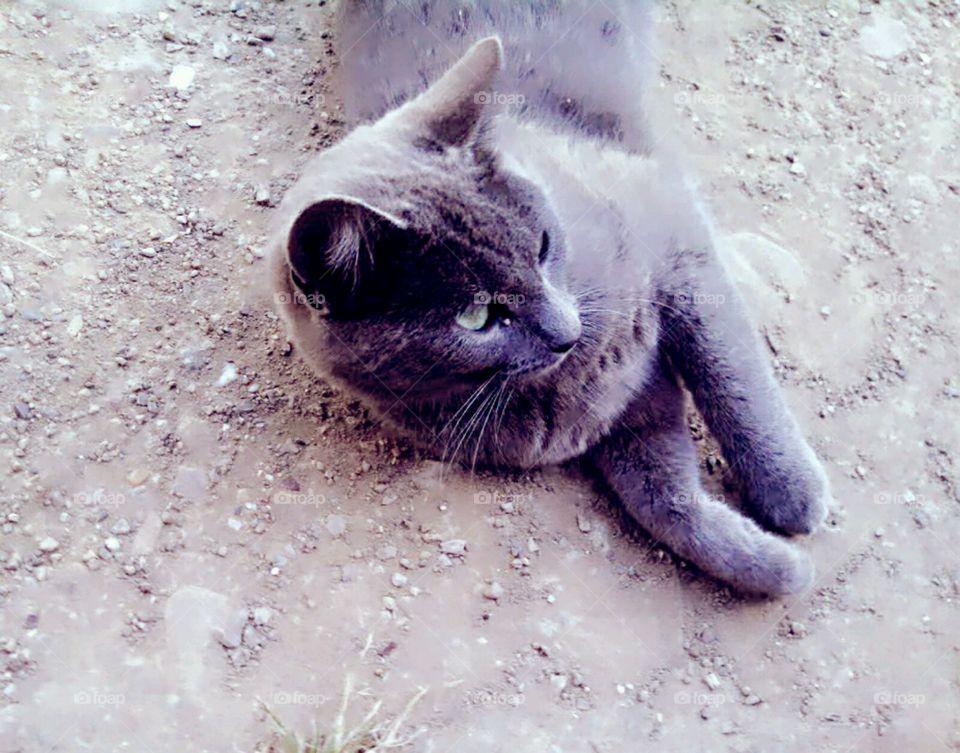 Dusty Kitty
