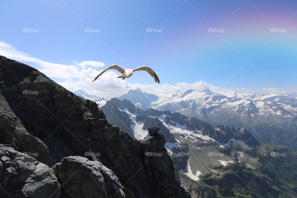 Bird flying over the mountain during winter