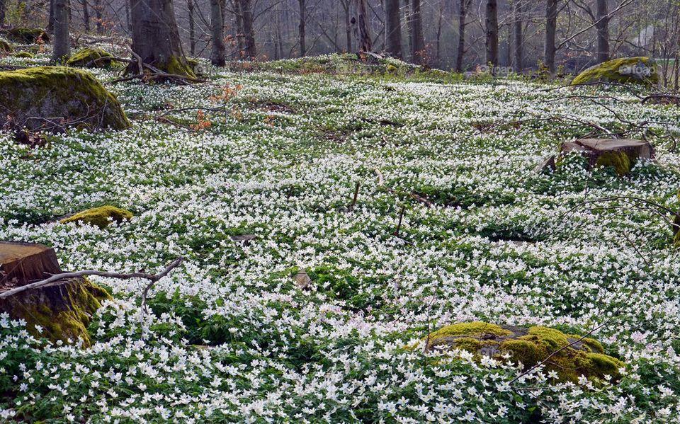 Field flowers in bloom